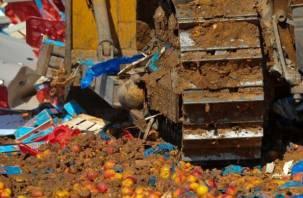 Под Смоленском тонны капусты, киви и апельсинов закопали в землю