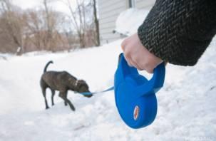 В Смоленске водитель-живодер сбил собаку и проехал по ней два раза