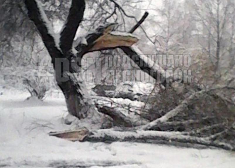 Смолянку едва не убило упавшее дерево
