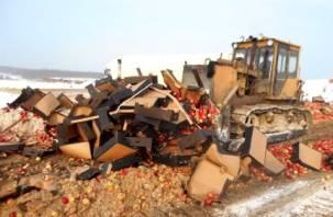 Под Смоленском уничтожили 21 тонну яблок