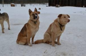 Смолянам предлагают на выходные побыть в роли хозяина собаки