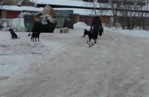 В Смоленске ветслужба займется большой стаей бродячих собак