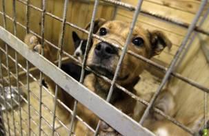 В райцентрах ищут деньги на отлов собак: в Смоленске никому до этого нет дела