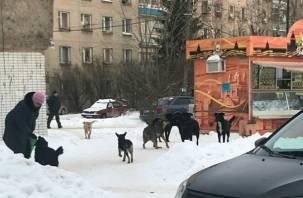 «Очень страшно. Это катастрофа»: в Смоленске бездомные псы нападают на детей
