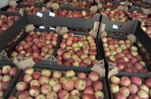 Смоленская таможня не пропустила тонны польских яблок и турецких томатов
