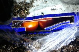 Через Смоленск не пропустили тонны «замаскированных» помидоров