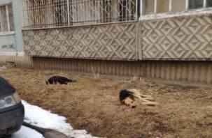 В Смоленске на Автозаводской стали травить собак