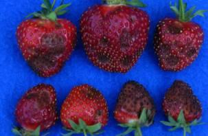 В Смоленской области выявлено опасное заболевание растений