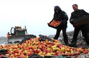 В Смоленской области десятки тонн томатов и яблок закопали в землю