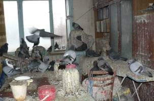 «Вы мне ничего не сделаете»: смолянка превратила квартиру в голубятню