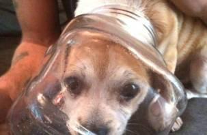 В Смоленске погибает собака с банкой на голове