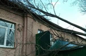 Карма настигла смоленских чиновников: дерево упало на здание администрации