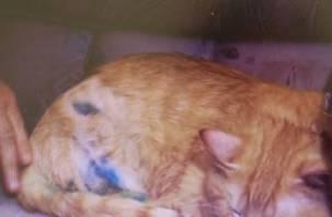 Появилось видео о судьбе смоленского кота, который сам себе отгрыз лапу