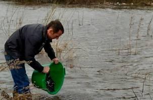 В Смоленске в Днепр выпустили около 40 килограммов осетровых