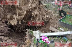 В Сети появились жуткие фото изуродованного ураганом смоленского кладбища