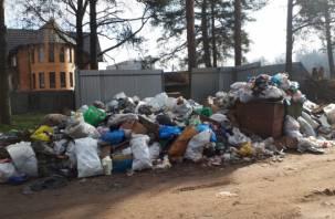 «Как бы крысы не побежали». Жители Ярцева устали от мусорного беспредела в городе