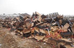 Под Смоленском уничтожили 12 тонн фруктов и овощей