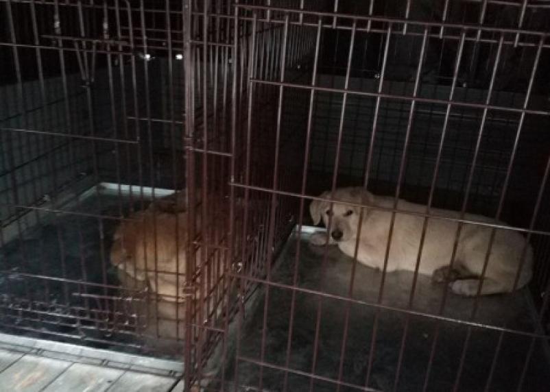 В Смоленске будут отлавливать проблемных псов