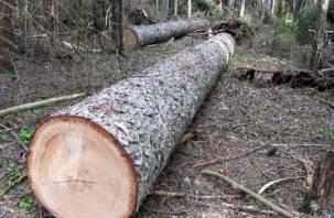 Смолянин нарубил в лесу елей и стал миллионером
