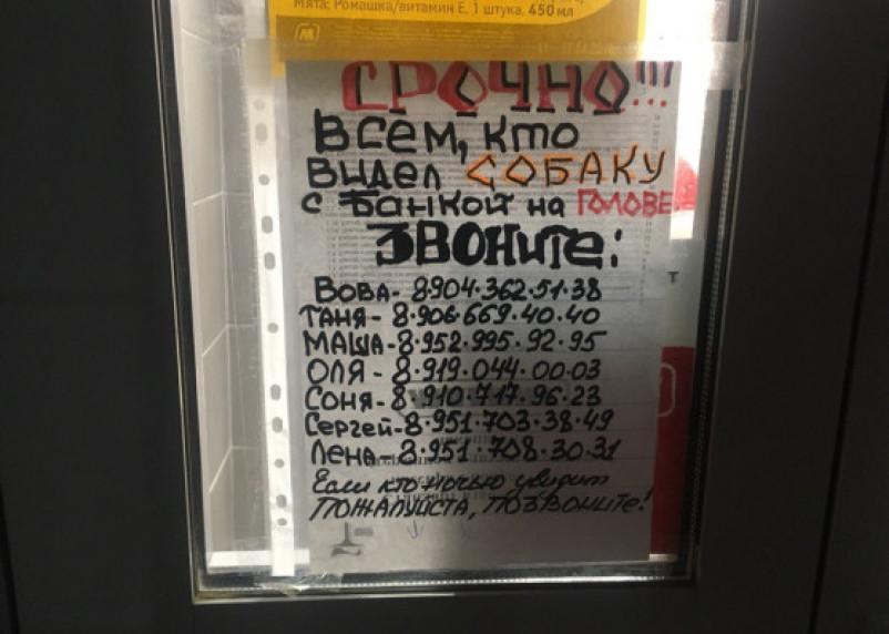 В Смоленске десятый день погибает собака с банкой на голове