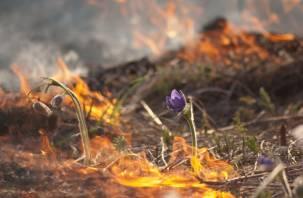 В Смоленской области к административной ответственности привлечены 124 поджигателя
