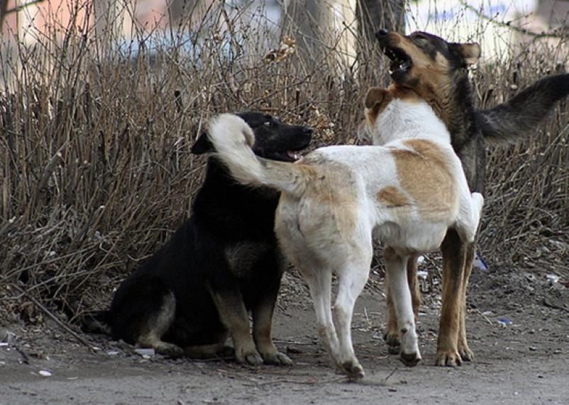 В Смоленской области ребенок стал жертвой бродячей собаки