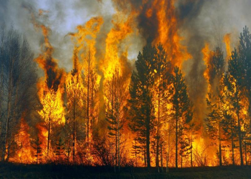 Стало известно состояние лесов Смоленской области
