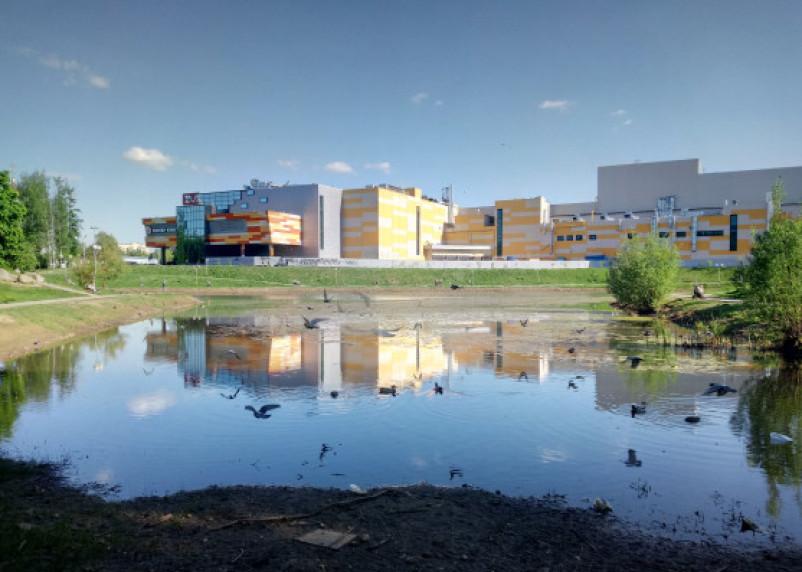 Пруд в парке 1100-летия Смоленска превратился в болото