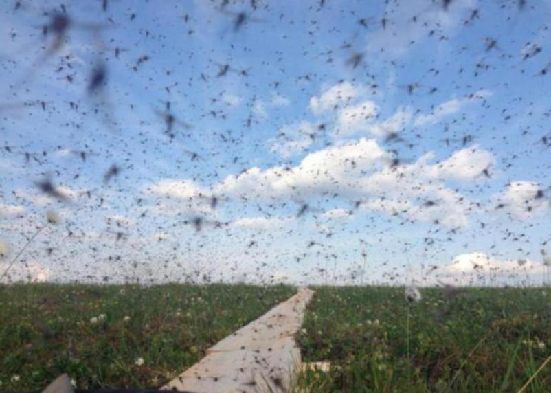Комары-убийцы добрались и до Смоленской области
