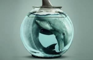 «Хлорированная тюрьма»: как издевались над дельфинами при перевозке из Смоленска
