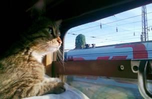 Смоляне могут купить билеты на поезда с 90% скидкой