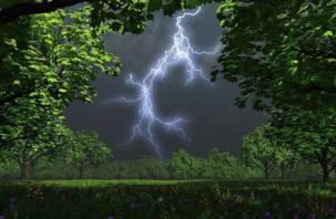 Дожди и грозы: пятница в Смоленской области будет теплой