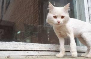 В Ярцеве кота побрили и выкинули на улицу
