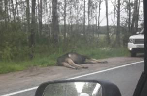 На Смоленщине стало больше аварий с участием диких животных