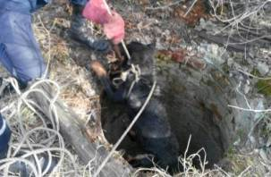В Смоленске собака провалилась в открытый люк