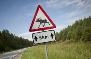 «Лось как стена». В Смоленске прошло мероприятие «Осторожно: Дикие Животные!»