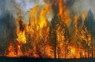 Экстренное предупреждение: на Смоленщине прогнозируют страшные лесные пожары