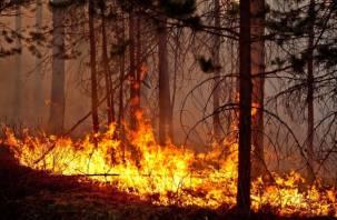 На Смоленщине ожидаются серьезные лесные пожары