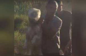 «Две недели с бутылкой на голове». В Астрахани собака повторила судьбу смоленского пса