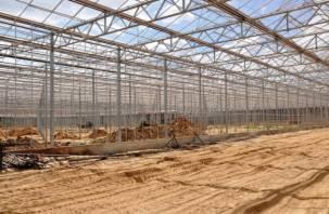В ноябре смоляне попробуют первый урожай рославльских тепличных огурцов