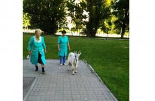 В Смоленске из поликлиники пришлось выставить козу