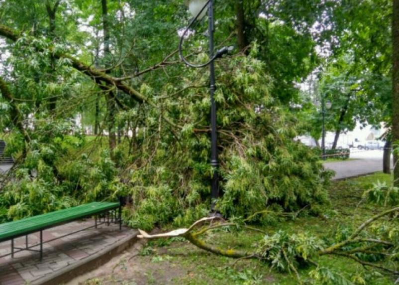 В Смоленской области намечается штормовой ветер и резкое похолодание