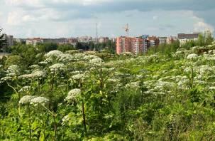 «Борща не сваришь»: ядовитое растение подбирается к центру Смоленска