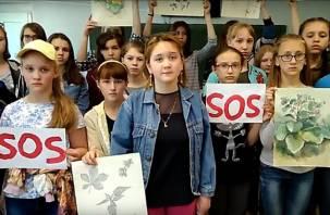 «Надежда только на вас»: смоленские школьники обратились к Владимиру Путину