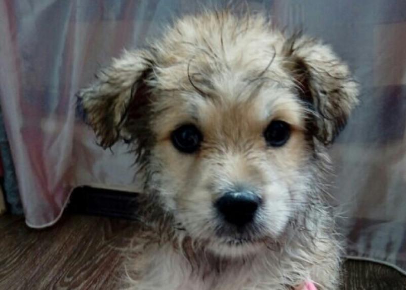 «Запутался в трясине»: смоляне спасли из озера тонущего щенка