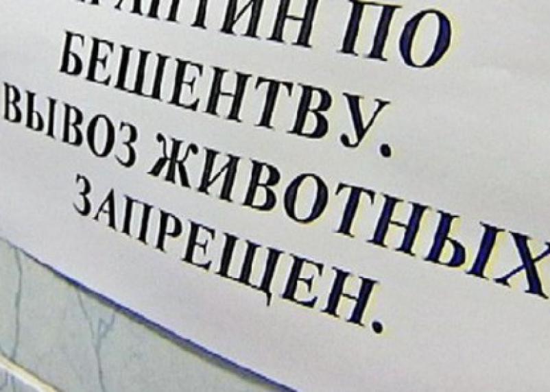 В Смоленской области объявлен карантин по бешенству