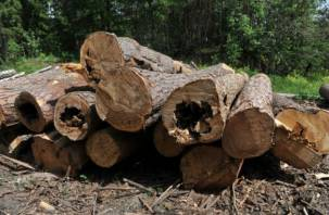 Бревна на полмиллиона: смолянин получил уголовку за кражу древесины