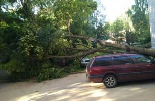 «Не очень доброе утро». В Смоленске упавшее дерево раздавило три машины