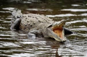 Нильский крокодил из Смоленска празднует новоселье в Белгороде