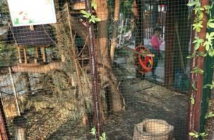 В Смоленске в Лопатинском саду белка «притворилась» мертвой